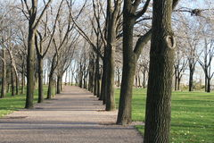 Morning Fitness. Walking trail lined with trees with a walker in the far distance Stock Photography