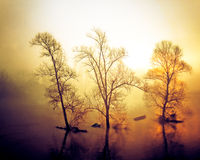 Yellow bright misty morning on the river stock photos