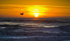 Morning Flight,Outer Banks,No Carolina Stock Photography