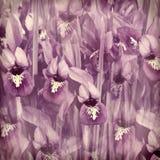 Morning floral violet iris springtime. Blurry background Royalty Free Stock Photos