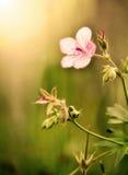Morning Flower Stock Image