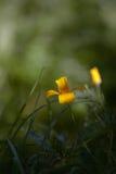 Morning flowers. Stock Photo