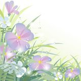 Morning flowers. Raster version of vector background with wild morning flowers and spider web covered with dew. There is in addition a vector format (EPS 10 Stock Images