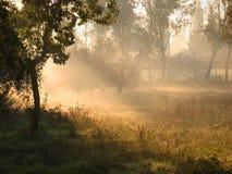 Morning fog. In the garden Royalty Free Stock Photos