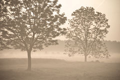 Morning fog 3 Royalty Free Stock Images