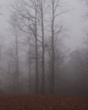 Morning Fog. Trees in the morning fog Stock Images