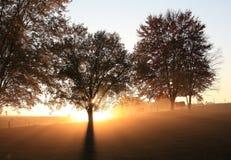 Free Morning Fog Stock Photography - 7063972