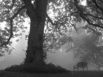 Morning Fog. Silhouette of a large tree, lid by sunrise and fog from the river, detailed with a park bench Royalty Free Stock Photo