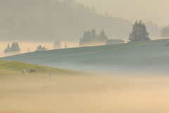 Morning fog in the Alps, Dolomites, Italy Royalty Free Stock Photography