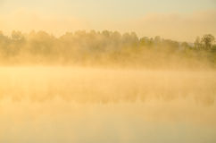 morning fog. around the lake grow birch . stock images