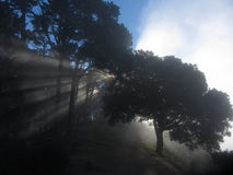 Morning Fog Attack. Morning sunrise with a wall of fog over the East Bay Hills in Oakland California Royalty Free Stock Photo