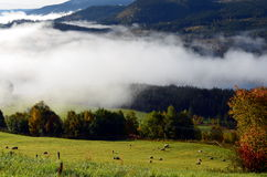 Morning fog in autumn landscape norway Royalty Free Stock Image