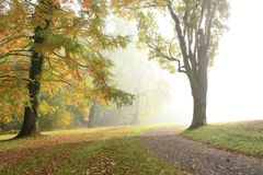 Morning fog in autumn park. Roadside trees in the park on a foggy day in autumn before the sun comes out Stock Photo