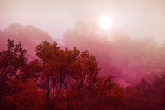 Morning fog in autumn royalty free stock images