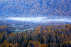 Morning fog in the birches Royalty Free Stock Photos
