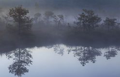 Morning with fog in the bog Royalty Free Stock Image