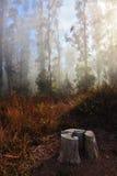 Morning fog at coast Pacific Ocean Stock Photo
