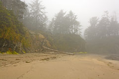 Morning Fog on Coastal Beach Royalty Free Stock Photo