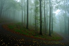 Morning with fog. Cold misty foggy morning in a fall valley of Bohemian Switzerland park. Hills with fog, landscape of Czech Repub royalty free stock images