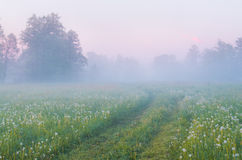 Morning fog. Country road in the morning fog Royalty Free Stock Photography
