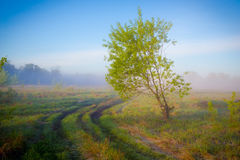 Morning fog on a countryside road Stock Photo