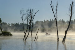 Morning fog in Danube Delta. Delta Dunarii - The Danube Delta is the second largest delta in Europe, after the Volga Delta, and is the best preserved on the Stock Images