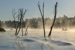 Morning fog in Danube Delta. Delta Dunarii - The Danube Delta is the second largest delta in Europe, after the Volga Delta, and is the best preserved on the royalty free stock photography