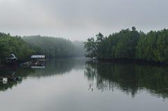 Morning fog in dense mangrove forest Royalty Free Stock Image
