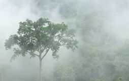 Morning fog in dense tropical rainforest at Bang lang National park royalty free stock photo