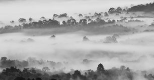 Morning fog in dense tropical rainforest in black and white style, Misty forest landscape Stock Images