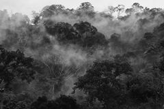 Morning fog in dense tropical rainforest in black and white style, Misty forest landscape Royalty Free Stock Images