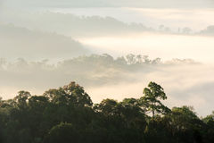 Morning fog in dense tropical rainforest Royalty Free Stock Photos