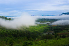Morning fog in dense tropical rainforest Stock Photos