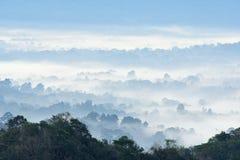 Morning fog in dense tropical rainforest at Khao Yai national park Royalty Free Stock Image