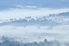 Morning fog in dense tropical rainforest at Khao Yai national park. Misty forest landscape Stock Image