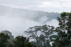 Morning fog in dense tropical rainforest stock photos