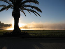 Morning Fog in Florida. Original photo of the morning fog on a cool Florida morning royalty free stock photo