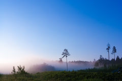 Morning fog. Foggy forest in the morning sunlight Royalty Free Stock Photos