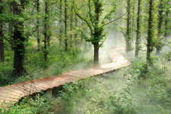 Morning fog forest Royalty Free Stock Photos