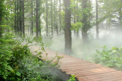 Morning fog forest Stock Image