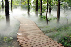 Morning fog forest Royalty Free Stock Photography