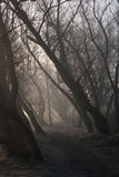 The morning fog in the forest. The big morning fog in the forest Royalty Free Stock Image