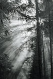 Morning fog in forest. stock photos
