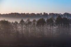 Morning fog in forest. Misty fog in the morning forest landscape stock photo