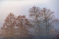 Morning fog in forest. Misty fog in the morning forest landscape royalty free stock images