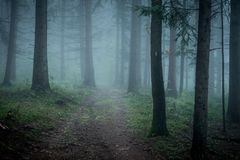 Morning fog on the forest somewhere in europe. Fog and trees Royalty Free Stock Photos