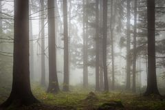 Morning fog on the forest somewhere in europe. Fog and trees Stock Photography