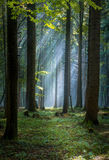 Morning fog on the forest somewhere in europe. Fog and trees Stock Photo