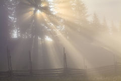 Morning fog in the  forest Royalty Free Stock Images