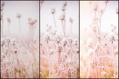 Morning fog and frost in the meadow - hoarfrost on thistle, soft focus on frost thistle, burdock. Soft focus on hoarfrost on thistle - burdock, morning fog and Stock Image